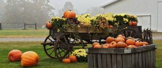 Новые законы для дачников и садоводов